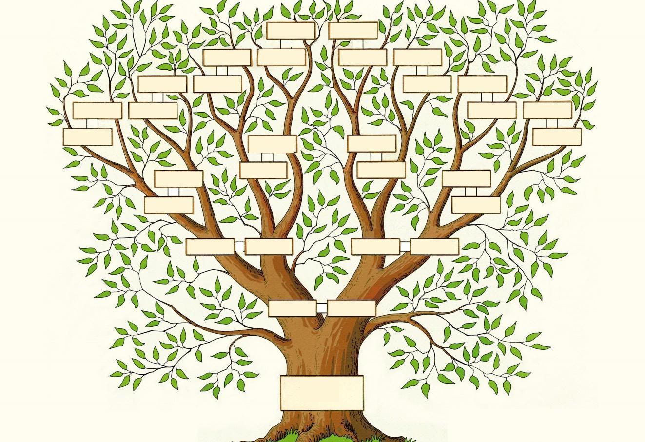 stamboom – De avonturen van onze zesdeklassers!